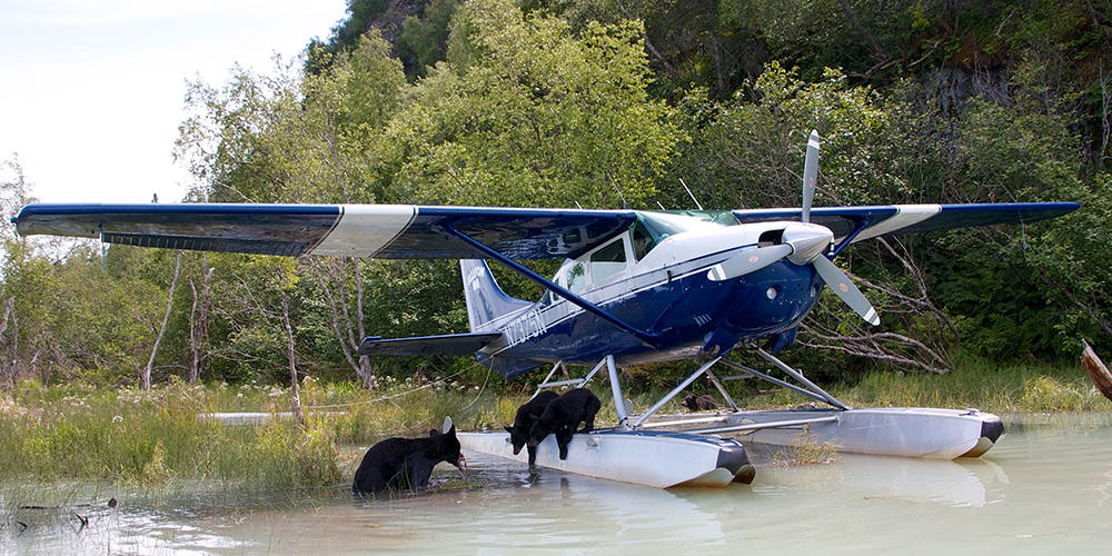 Bears and the Ellison Air Plane